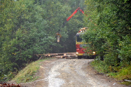 illegally: MARISEL ROMANIA  SEPTEMBER 14: Truck loading illegally chopped tree trunks. 366000ha of Romanian forest was illegally chopped down in 19902011. On Sept 14 2012 in Marisel Romania