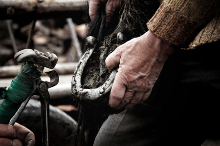 smithery: Unidentified blacksmith, farrier shoeing a horse. Such type of smithery techniques are very rare in Romania.  Stock Photo