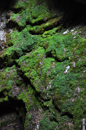tropical native fern: Abundant jungle vegetation in tropical cave Stock Photo