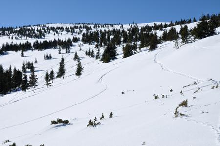 off piste: Off piste tracks in the snow Stock Photo