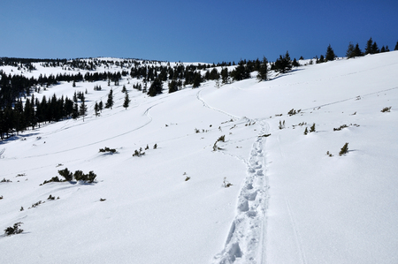 offpiste: Winter mountain with off-piste tracks Stock Photo