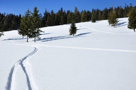powder snow: Fresh ski tracks in powder snow