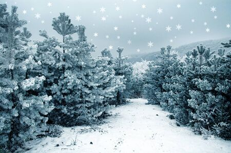 grey pattern: Christmas background with snowy fir trees