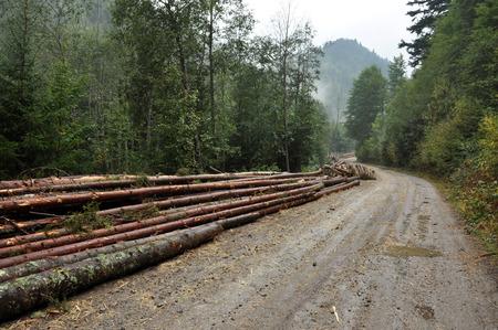 deforestacion: concepto de la deforestaci�n. Pila de troncos de pino Foto de archivo