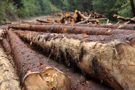 deforestacion: concepto de la deforestación. Pila de troncos de pino Foto de archivo