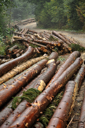 pile of logs: Deforestation concept. Pile of pine logs