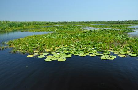 turf bog: Landscape in Danube delta, Romania Stock Photo