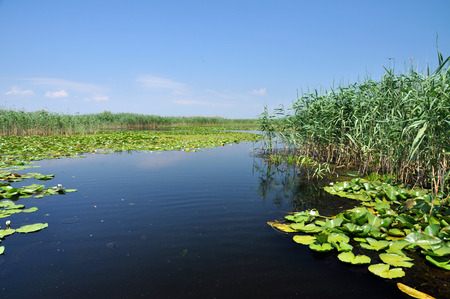 danubian: Water channel, river in Danube delta, Romania