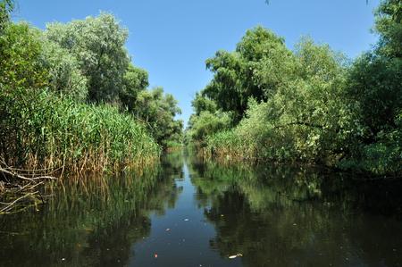 turf bog: Trees near a river in Danube delta, Romania
