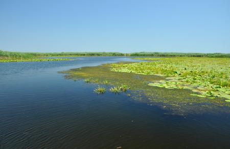 turf bog: Beautiful lake in Danube delta, Romania