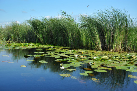 turf bog: Water channel, river in Danube delta, Romania