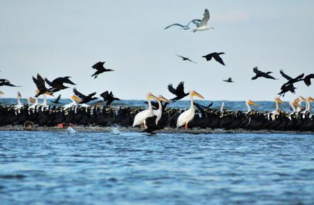 danube delta: Flock of birds in the Danube delta