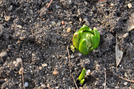 plant seed: Plant seed growing concept
