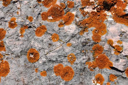 symbiotic: Orange lichen on limestone
