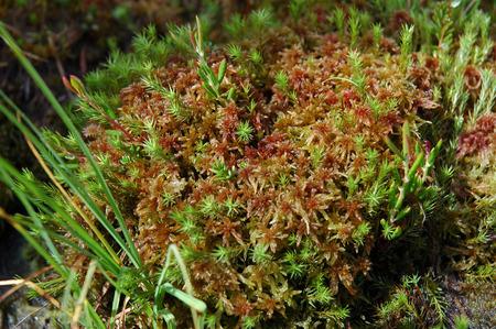 turf bog: Green moss, turf bog in the spring Stock Photo