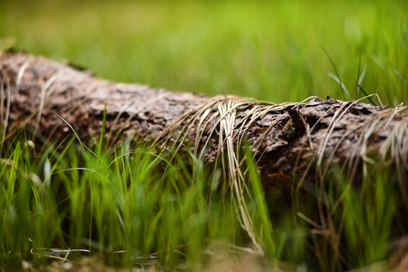 Dry grass on a tree trunk