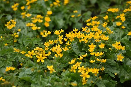 yellow wildflowers: Yellow wildflowers in the summer Stock Photo