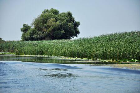 danube delta: Water channel in Danube delta. Romania Stock Photo