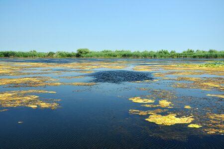 danubian: Danube delta. Water channel, lake and marsh. Romania