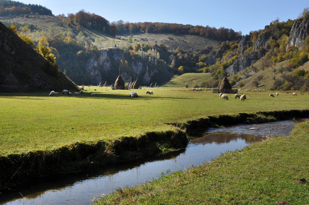 watercourse: Watercourse in a green meadow. Herd of sheep in the background