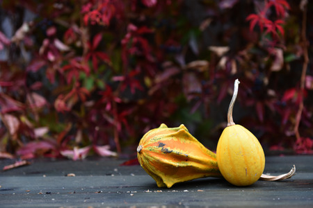 Autumn yellow pumpkin on a wooden table. Red ivy in the background