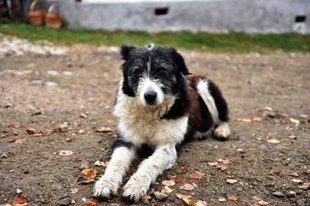 pleading: Abandoned, sad, homeless stray dog laying on the street Stock Photo