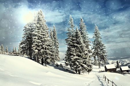 tress: Idyllic winter landscape with snow covered fir tress. Christmas concept