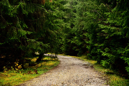 unsurfaced road: Winding road in a pine forest, wood Stock Photo