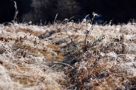 Hoarfrost on grass. Rime on grass on a cold winter morning