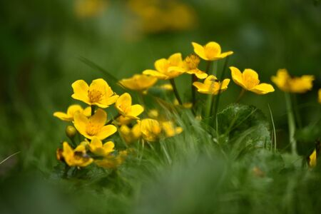 Beautiful yellow wildflowers blooming in the meadow stock photo beautiful yellow wildflowers blooming in the meadow stock photo 72610956 mightylinksfo