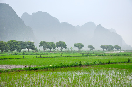 Vietnam landscape. Rice fields and karst towers in monsoon Stock Photo