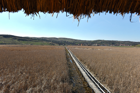 Landscape of a plain with reed, home of migratory birds. Sic, Transylvania, Romania