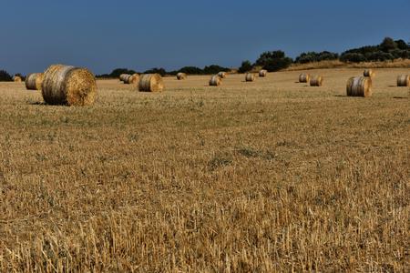 hayroll: Straw bales, haystack on agricultural farmland against blue sky