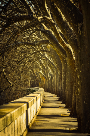 Majestic promenade with old trees near Tevere river in Rome, Italy