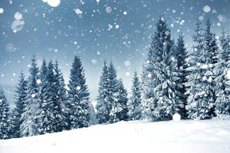 눈 덮인 전나무와 폭설과 크리스마스 배경