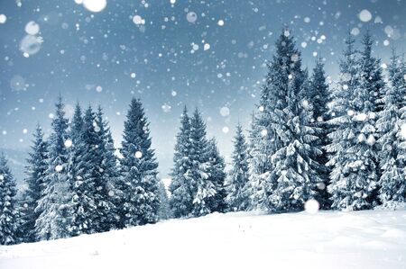 Christmas background with snowy fir trees and heavy snowfall Standard-Bild