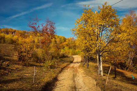 Mountain autumn landscape with colorful forest. Filtered image Stock Photo