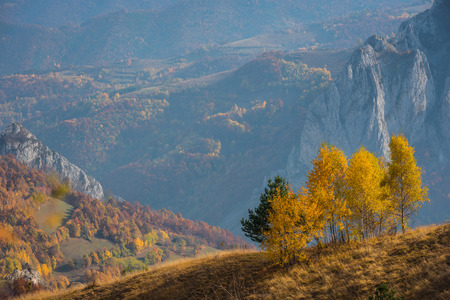 Mountain autumn landscape with yellow birch trees. Filtered image