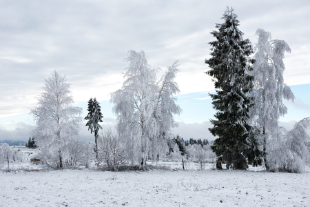 Christmas background with snowy trees winter holidays greetings christmas background with snowy trees winter holidays greetings stock photo 91049307 m4hsunfo