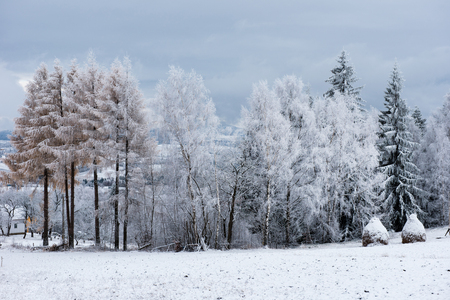 Christmas background with snowy trees winter holidays greetings christmas background with snowy trees winter holidays greetings stock photo 91049319 m4hsunfo