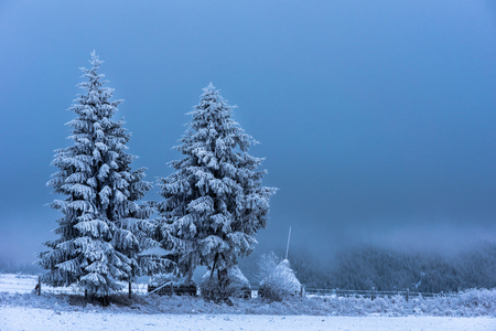 Winter mountain scene. Christmas fir tree covered with hoarfrost and snow