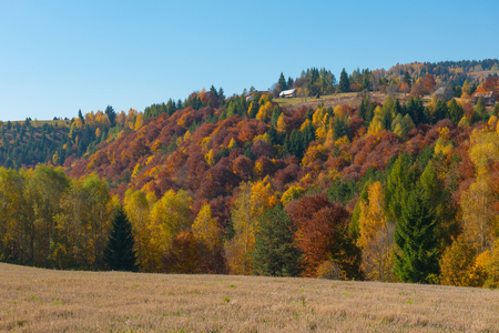 Autumn countryside panorama in mountains. Forest with colorful foliage. Transylvania, Romania Stock fotó