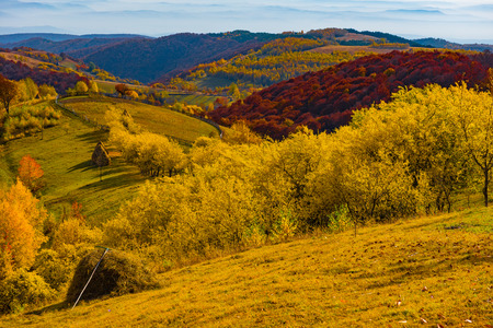 Majestic landscape with autumn trees in forest. Colorful fall in Transylvania, Romania