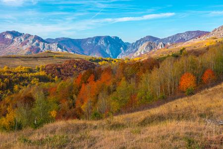 Autumn in Transylvania. Colorful foliage forest in the mountains, Romania 免版税图像