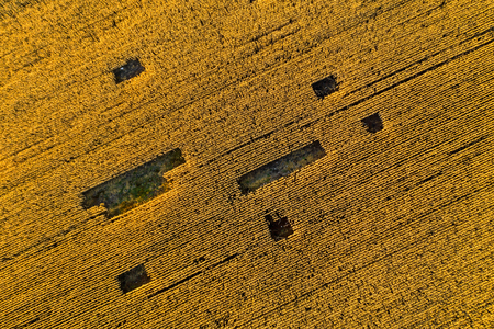Aerial agricultural landscape. Plantation field ready for harvest. Above view from a drone Foto de archivo