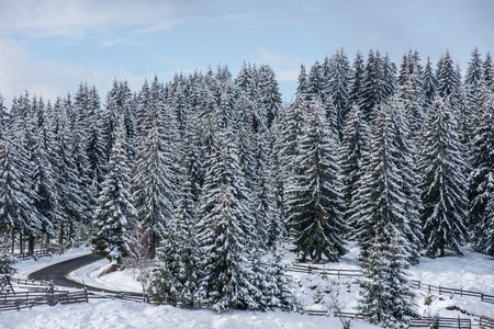 Winter landscape with snow covered fir trees. Christmas postcard concept