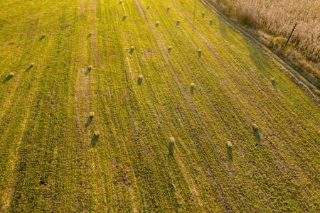 Aerial drone photo of hay rolls, bales in the wheat field in late afternoon lights