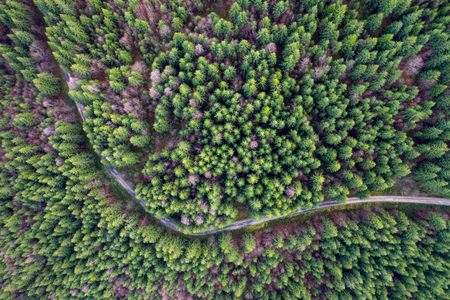 Beautiful road through evergreen pine forest. Aerial drone view