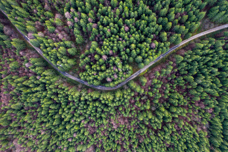 Aerial top view of an evergreen forest road from a drone