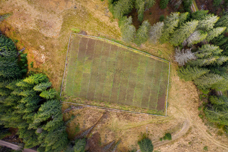 Aerial view of fir tree nursery, plantation from a drone